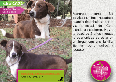 manchas_2-min